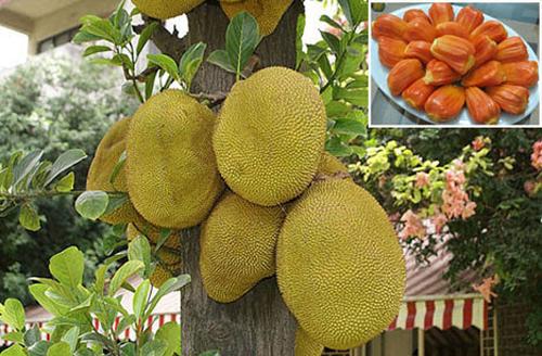 Làm giàu từ cây ăn trái nhờ các giống cây ăn quả dễ trồng nhất