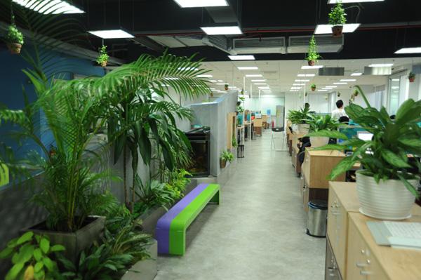 Tạo thu nhập từ mô hình trồng cây văn phòng