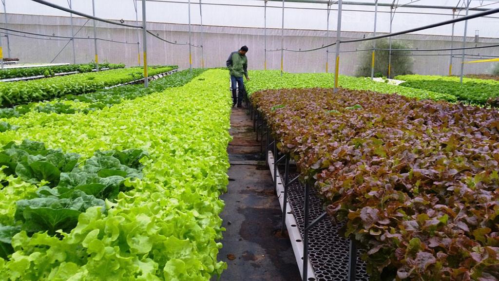 Làm giàu ở nông thôn từ việc phát triển mô hình & xây dựng thương hiệu rau sạch