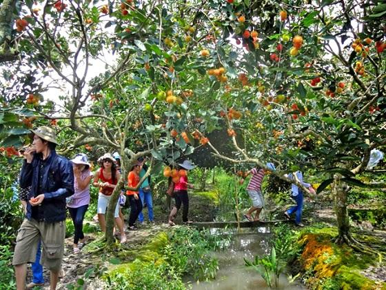 Làm giàu từ mô hình vườn cây ăn quả kết hợp du lịch sinh thái
